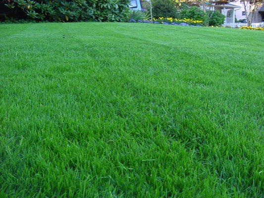 Lawn-Care-Services-Fircrest-WA