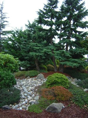 residential-landscape-installation-dupont-wa